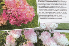 Гортензии-стр-6