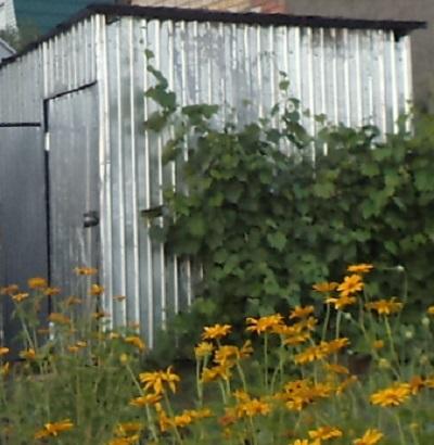 Хозпостройки на даче — сарай