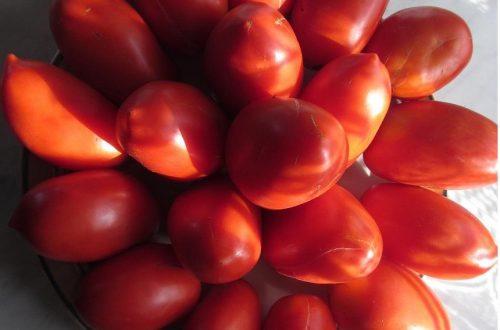 помидоры Царевна Лебедь