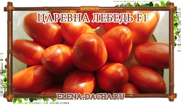 Описание сорта томата Царевна лебедь, его характеристика и урожайность – Дачные дела