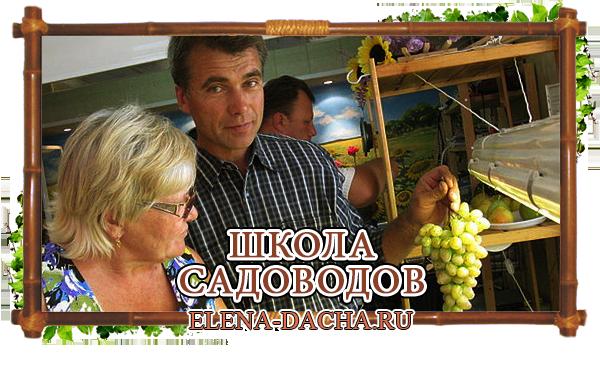 Могилёвский