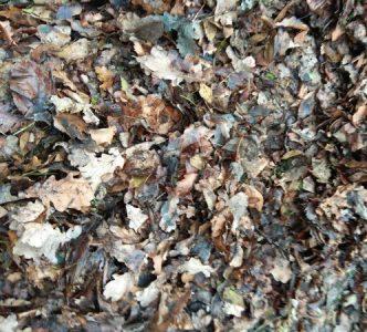 мульча из дубовых листьев