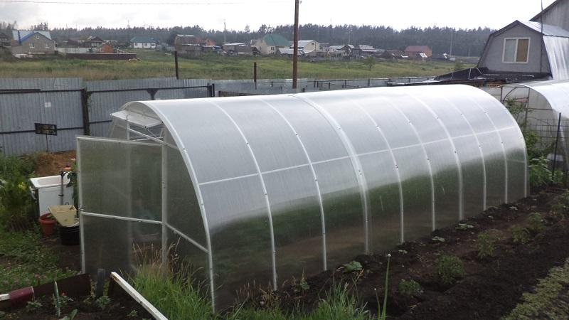 Зелёная почва в теплице